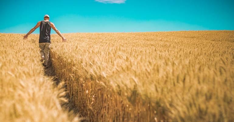covek u polju psenice
