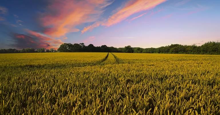 zalazak sunca na polju